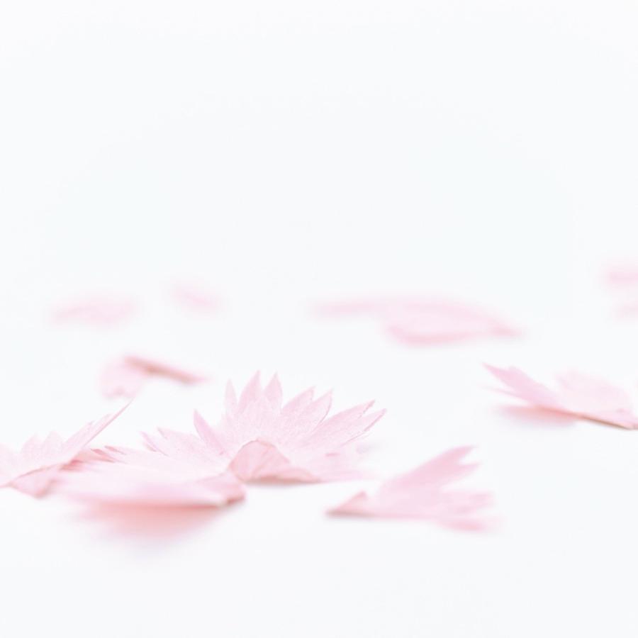 花色鉛筆ギフトセット(花色鉛筆・鉛筆削り・ポストカード・メッセージカード)★ラッピングサービス無料★ ギフト プレゼント trinusstore 09
