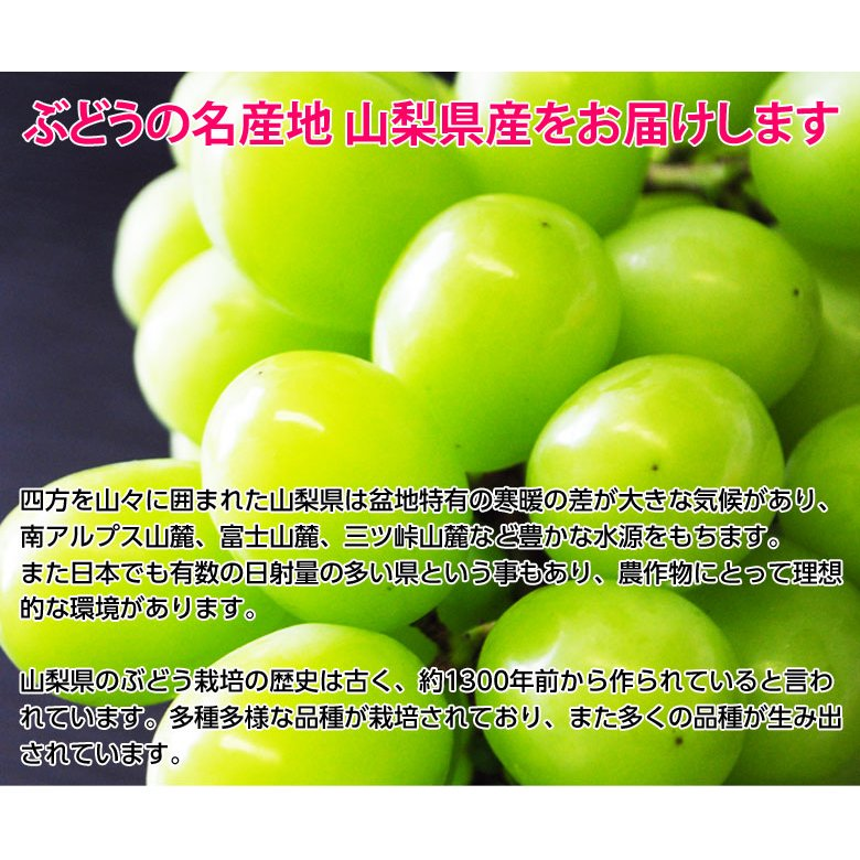 『シャインマスカット』 山梨県産 2房 計約800g ※常温または冷蔵 送料無料 tsukijiichiba 10