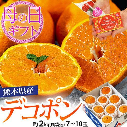 母の日 2021 熊本県産 糖度13度以上 デコポン 約2kg(風袋込) 7〜9玉 化粧箱 カーネーション(造花)+メッセージカード付※常温 送料無料|tsukijiichiba