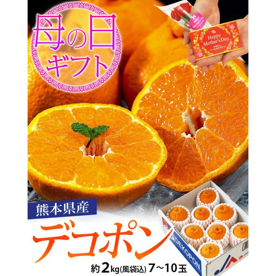 母の日 2021 熊本県産 糖度13度以上 デコポン 約2kg(風袋込) 7〜9玉 化粧箱 カーネーション(造花)+メッセージカード付※常温 送料無料|tsukijiichiba|02