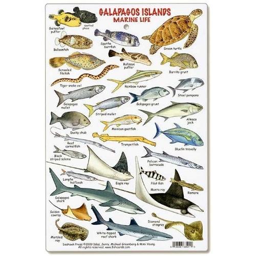 Galapagos Islands Marine Life ID Card by fishcardscom
