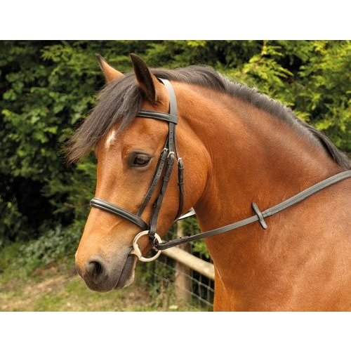 Windsor Equestrian Bridle With Plain Cavesson NosebandブラックPony