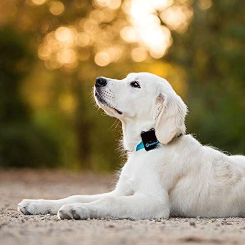 Tractive 3G 犬用GPSトラッカー - 犬の安全を守るペットファインダ(日本国内唯一の正規代理店)|ubtc2|04