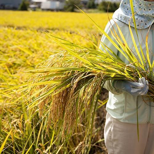 林農産 もち米 新大正糯(精米・10kg)令和2年度 - 切り餅、赤飯、おはぎ、おこわ、何にでも合うもち米|umaimura|02
