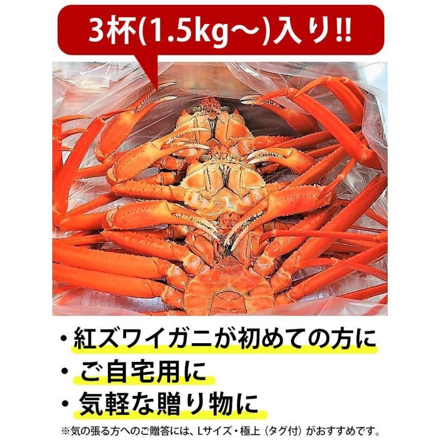 カニ 蟹 かに 通販 ずわいがに ズワイガニ カネツル砂子商店 高志の紅ガニ(M)[冷蔵] 【2セットまで】ボイル 富山 お取り寄せ 発送は年明けになります|umaimura|04
