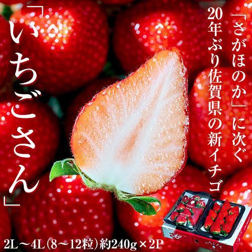 『いちごさん』佐賀県産いちご 2L〜4L(8〜12粒) 約240g×2パック ※冷蔵|umeebeccyasannriku