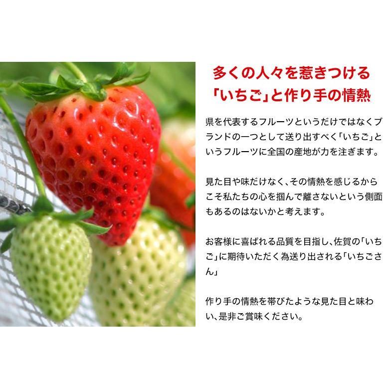 『いちごさん』佐賀県産いちご 2L〜4L(8〜12粒) 約240g×2パック ※冷蔵|umeebeccyasannriku|05