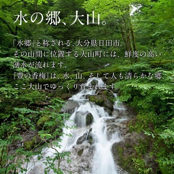ご贈答用 梅干し 750g 豊の香梅 大分県大山町産|umeyano|06