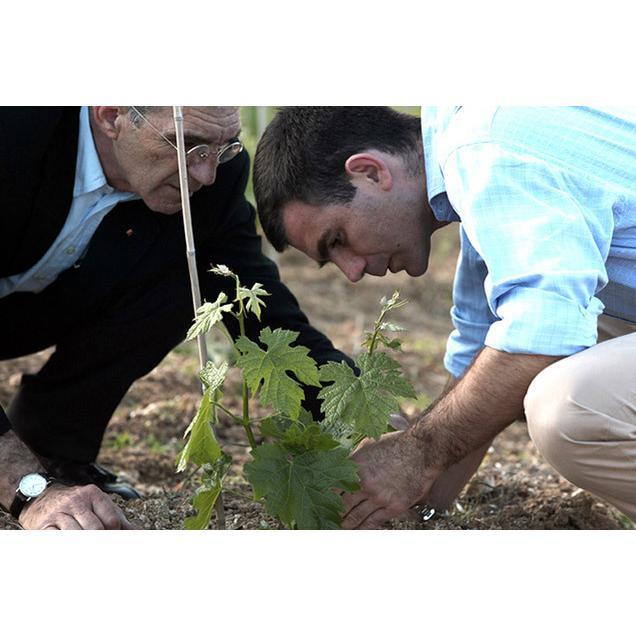 カリ・リーザ[2015]キリ・ヤーニ 赤 750ml Kir-Yianni[Kali Riza]ギリシャ 赤ワイン|unibiswine|04