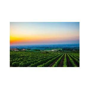 プリミティーヴォ・ディ・マンドゥーリア[2018]ポッジョ・レ・ヴォルピ 赤 750ml Primitivo di Manduria DOC[POGGIO LE VOLPI] イタリア プーリア 赤ワイン|unibiswine|05