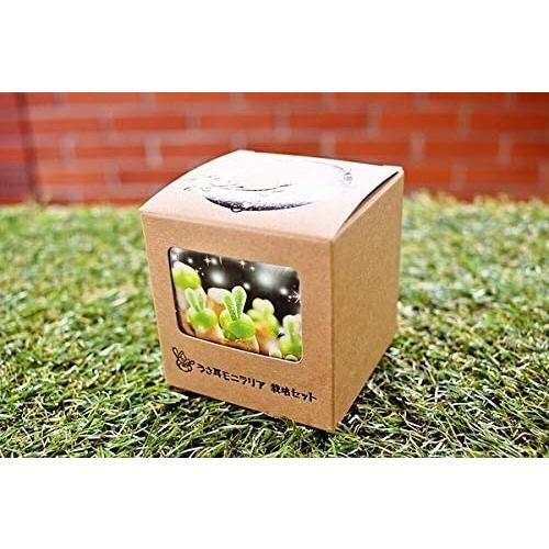 うさ耳モニラリア 栽培キット 種子10粒 可愛い箱に全部入り。 Monilaria cactus|unicorn802|06