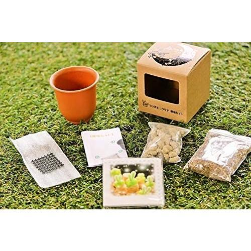 うさ耳モニラリア 栽培キット 種子10粒 可愛い箱に全部入り。 Monilaria cactus|unicorn802|07