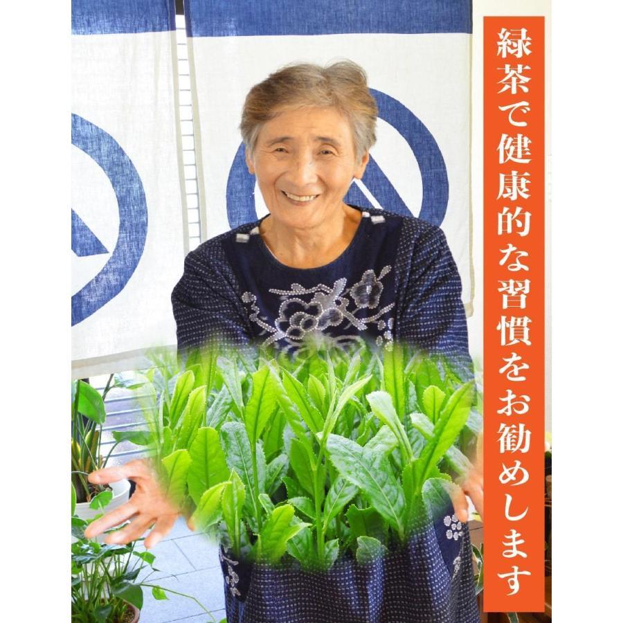 鹿児島茶 送料無料 緑茶 お徳用 お茶 ティーバッグ 2.5g×100個入 ティーパック 大容量 カテキン 100包 水出し オフィス 業務用 いつどこ ネコポス|unoike|11