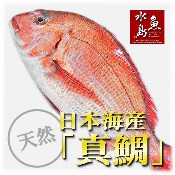 天然真鯛 マダイ メーカー再生品 桜鯛 日本海産 2.5〜2.9キロ物 公式通販