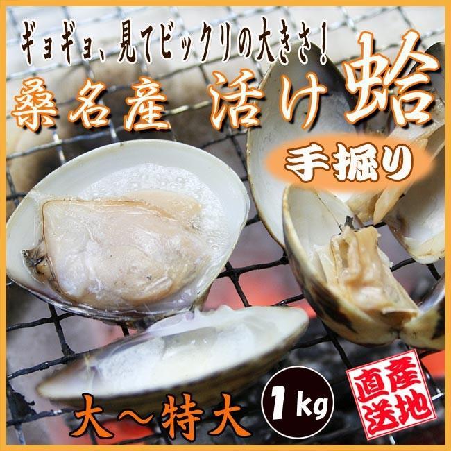 ハマグリ 大〜特大サイズ 1kg 三重県 桑名産 はまぐり 未使用 評判 活け蛤