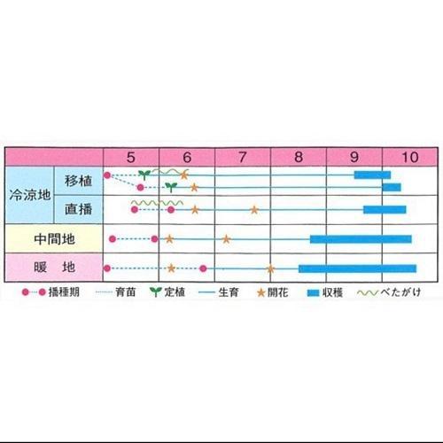 落花生 種子 種 ナカテユタカ 中手豊 500g urakawamameten 05