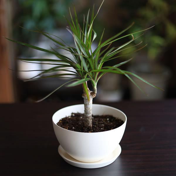 白い陶器の植木鉢 / ボールタイプ|utyu|13