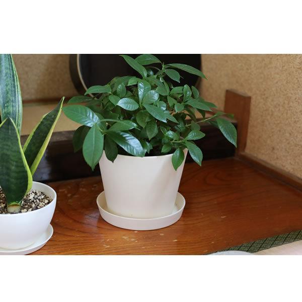 白い陶器の植木鉢 / すり鉢タイプ utyu 13