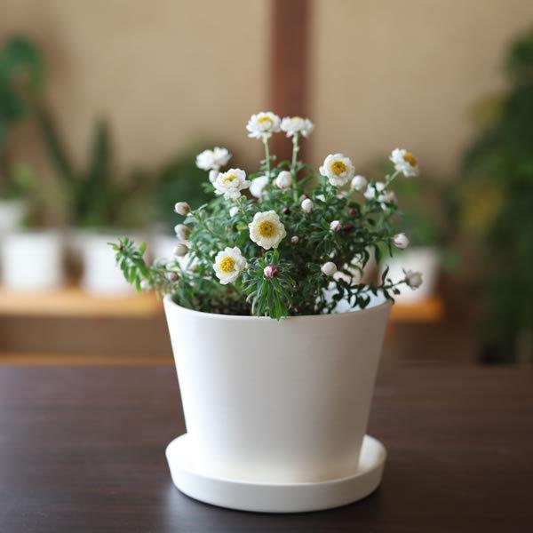 白い陶器の植木鉢 / すり鉢タイプ utyu 03
