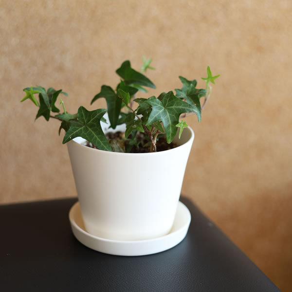 白い陶器の植木鉢 / すり鉢タイプ utyu 05