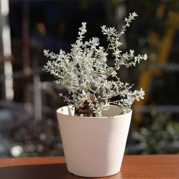 白い陶器の植木鉢 / すり鉢タイプ utyu 09