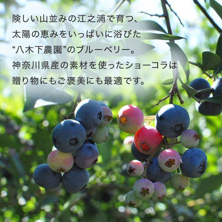 サマーギフト8個入(送料込) [8/16着迄] vanillabeansyokohama 06