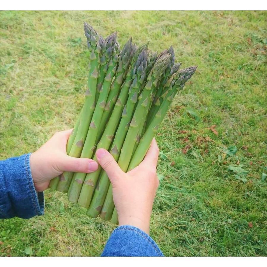 アスパラガス グリーンアスパラ 国産アスパラ 新潟県産 ともちゃん農園 500g束|vegetable-fruit-igh