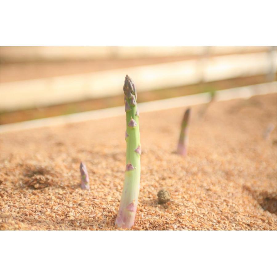 アスパラガス グリーンアスパラ 国産アスパラ 新潟県産 ともちゃん農園 500g束|vegetable-fruit-igh|06