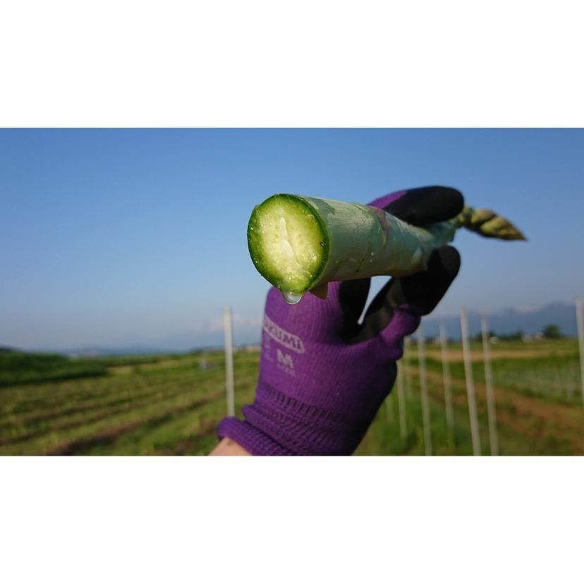 アスパラガス グリーンアスパラ 国産アスパラ 新潟県産 ともちゃん農園 500g束|vegetable-fruit-igh|10