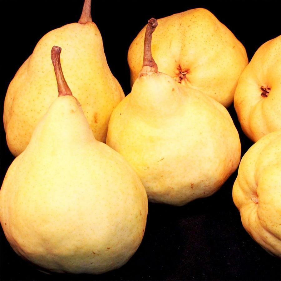 洋なし ル レクチエ 5〜7玉・約2kg 化粧箱  新潟県産 西洋梨 洋梨 vegetable-fruit-igh 06
