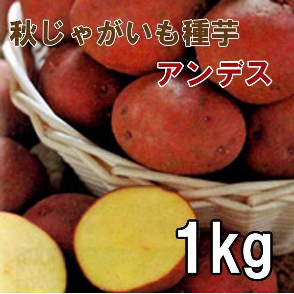 野菜・種/苗[春植えジャガイモ種芋]アンデス 秋植えじゃがいも種芋・生もの種 量り売り1kg 【12月中旬頃発送】 vg-harada