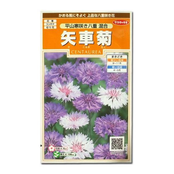 花の種 矢車菊[平山寒咲き八重 混合] 1ml(メール便発送) vg-harada