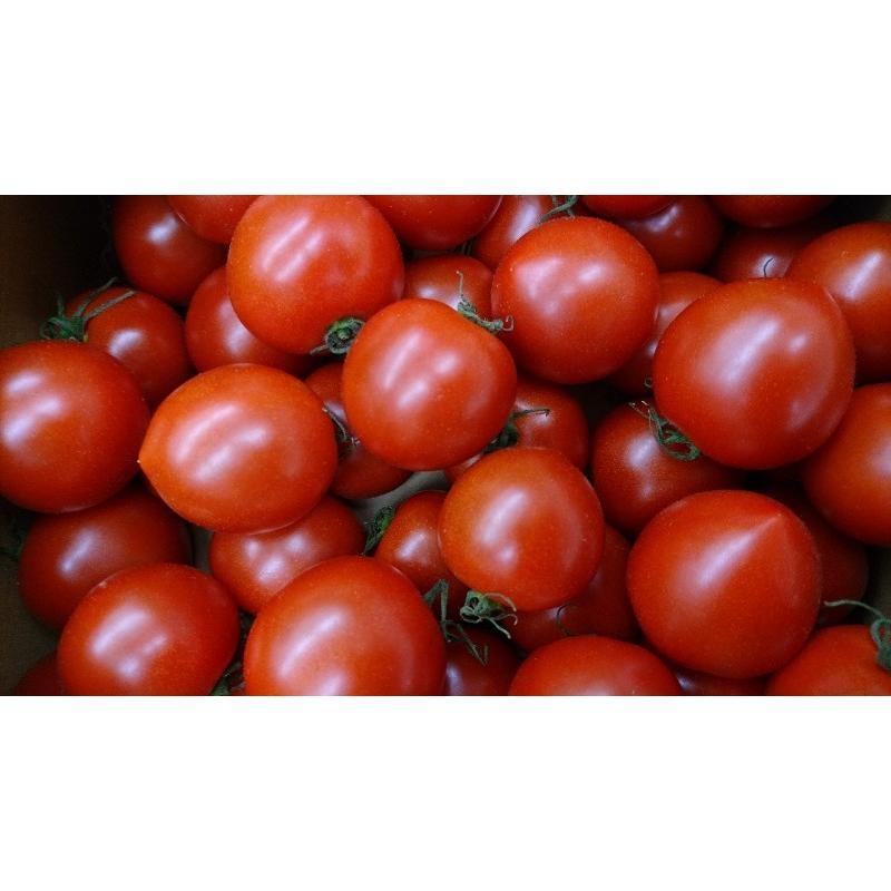 お得パック めぐみでぃトマト 1kg×2 箱入り 若狭の恵 wakasa-megumi