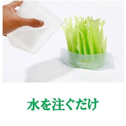 加湿器 ペーパー加湿器 まるで観葉植物 電気不要 気化式加湿器 自然気化式・エコロジー加湿器|wakasugi2012|20