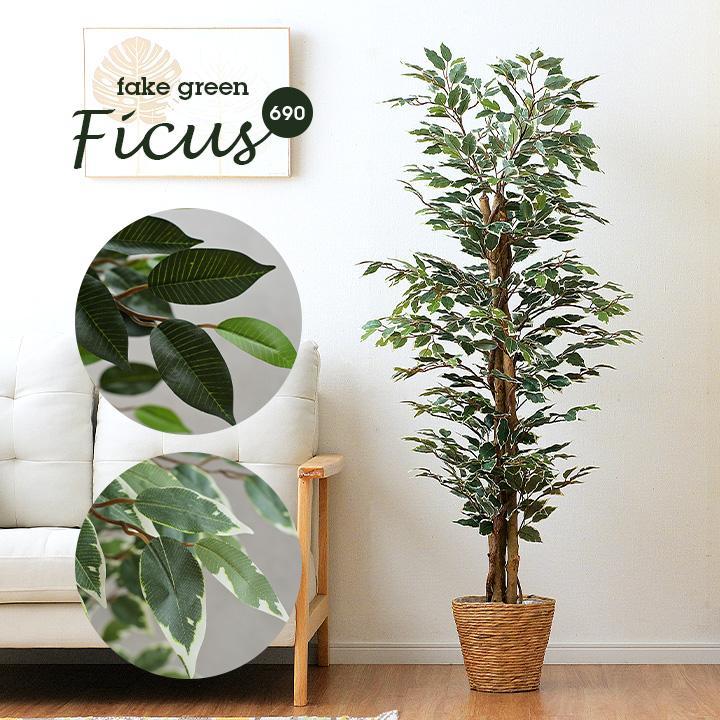 人工観葉植物 フェイクグリーン Ficuse(フィカス) 690 H150cm・H160cm 2種対応 人工植物 観葉植物 おしゃれ フェイク 造花 大型 グリーン インテリア|wakuwaku-land