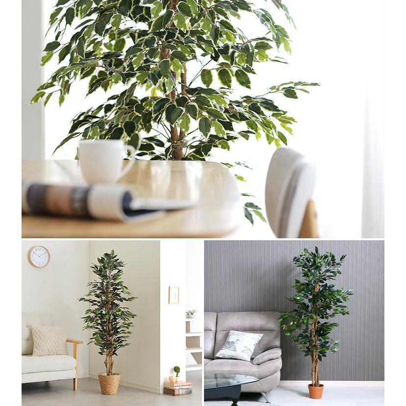 人工観葉植物 フェイクグリーン Ficuse(フィカス) 690 H150cm・H160cm 2種対応 人工植物 観葉植物 おしゃれ フェイク 造花 大型 グリーン インテリア|wakuwaku-land|08