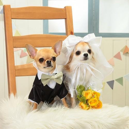 【送料無料】結婚式や記念日に愛犬のためのベール付きウェディングドレス☆|wanpla|04