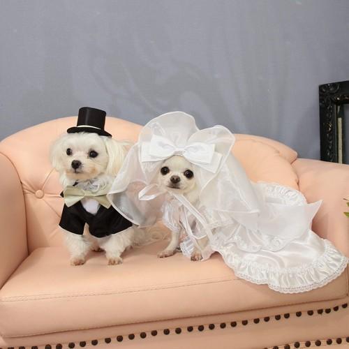 【送料無料】結婚式や記念日に愛犬のためのベール付きウェディングドレス☆|wanpla|05