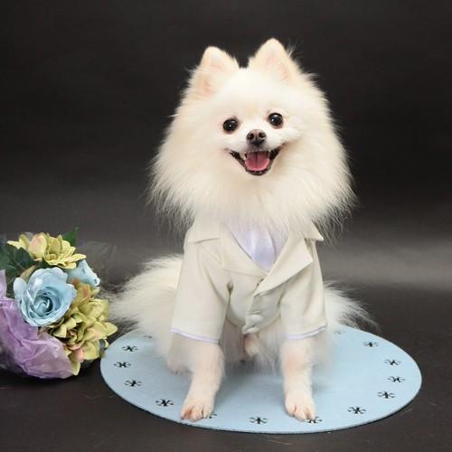 細かいサイズにも対応 愛犬のためのタキシードスーツ☆ 結婚式や記念日に【送料無料】 wanpla
