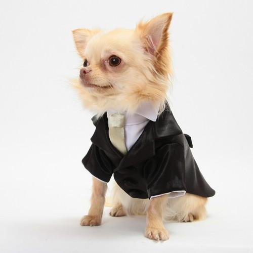 細かいサイズにも対応 愛犬のためのタキシードスーツ☆ 結婚式や記念日に【送料無料】 wanpla 02