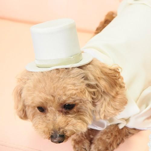 犬用シルクハット(受注生産)タキシードと合わせてどうぞ。|wanpla|02