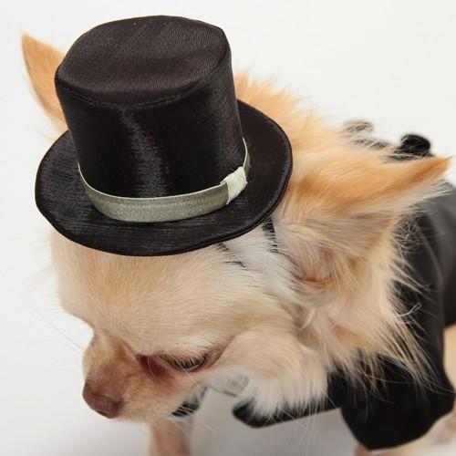 犬用シルクハット(受注生産)タキシードと合わせてどうぞ。|wanpla|03