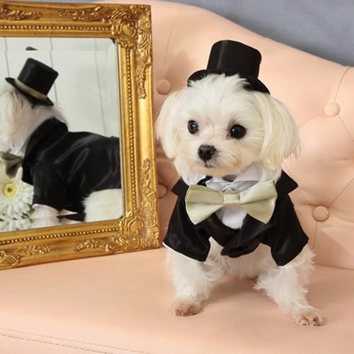 【送料無料】結婚式や記念日に。愛犬のためのタキシードスーツ&シルクハット&蝶ネクタイセット(受注生産) wanpla