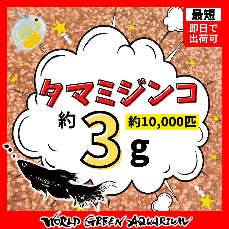 【メダカの教科書掲載記念10%以上増】すごい売れてます!高品質 タマミジンコ 約10000匹+グリーンウォーター付き めだかの餌や金魚の稚魚など 産卵促進餌