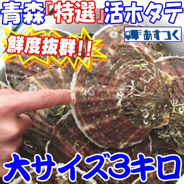 ホタテ 殻付き 活ほたて 大サイズ3キロ 青森 陸奥 貝柱が美味 (約15枚前後入り) お取り寄せ