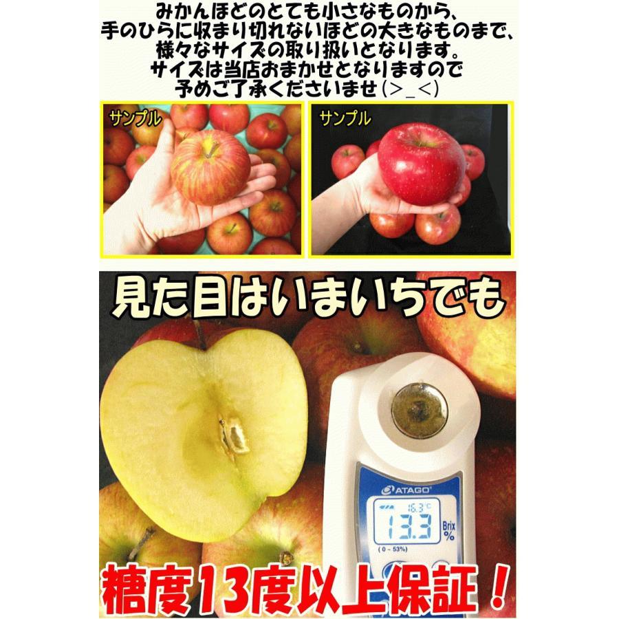 クーポンで200円引き!あすつく 送料無料 りんご 10kg箱 トキ ご家庭用 訳ありリンゴ 鮮度抜群 青森 リンゴ 10キロ箱 world-wand 14
