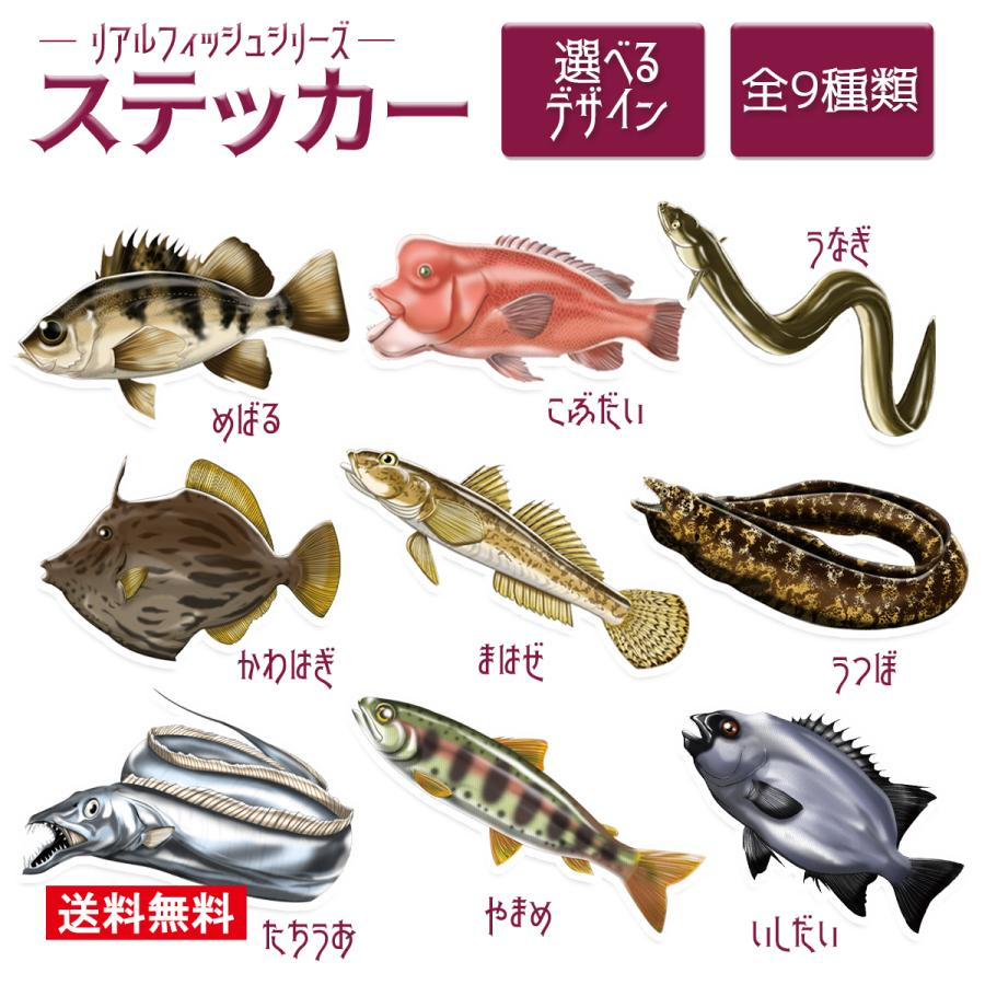 オルルド釣具 ステッカー リアルフィッシュシリーズ コブダイ 釣り 魚 シール