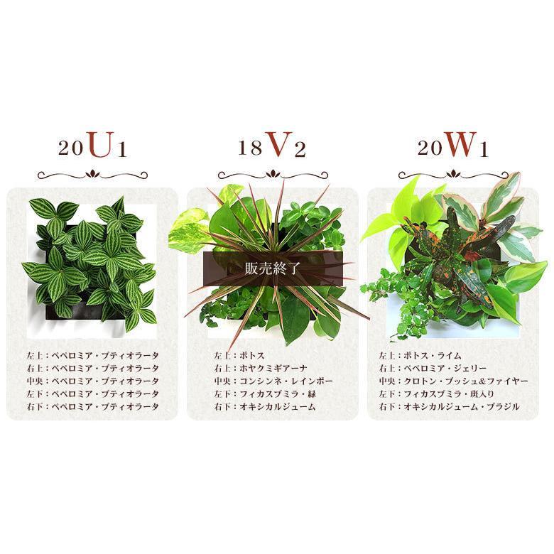 送料無料 壁掛けできる観葉植物 ミドリエ デザイン「フレーム」選べる!植栽パターン&カラー|worldgarden|04
