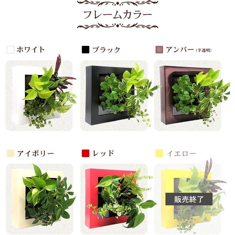 送料無料 壁掛けできる観葉植物 ミドリエ デザイン「フレーム」選べる!植栽パターン&カラー|worldgarden|06