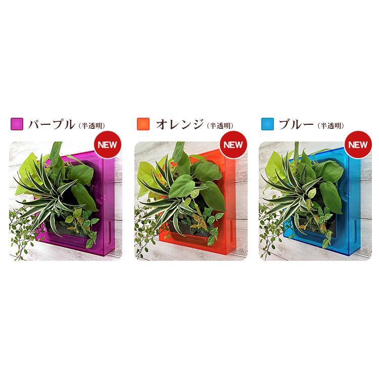 送料無料 壁掛けできる観葉植物 ミドリエ デザイン「フレーム」選べる!植栽パターン&カラー|worldgarden|07